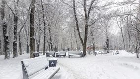 Snowfall. Royalty Free Stock Photography