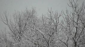 Snowfall and trees stock footage