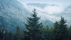 Snowfall On Trees Near Misty Mountains. Snowing on pine forest in mountainous area in winter stock video