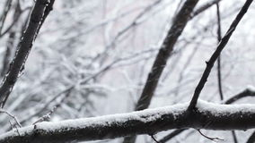 Snowfall and the trees. stock video footage