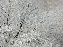 Snowfall, trees in snow. Winter cityscape 02.12.2015, Voronezh, Russia Royalty Free Stock Images