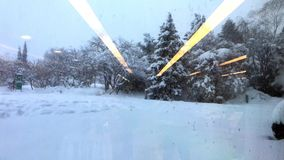 Snowfall on the trees. Pine trees in snow stock video