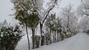 Snowfall on trees and snowy roads. HD 1080 stock footage