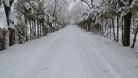 Snowfall on trees and snowy roads. HD 1080 stock video footage