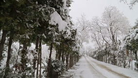 Snowfall on trees and snowy roads stock video footage