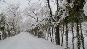 Snowfall on trees and snowy roads stock video