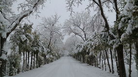 Snowfall on trees and snowy roads. HD 1080 stock video