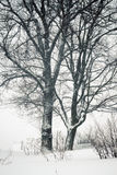 Snowfall trees Royalty Free Stock Images