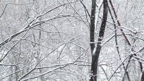 Snowfall and the trees. Wide shot. stock video footage