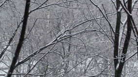 Snowfall and the trees. stock footage
