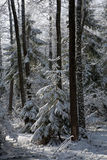 Snowfall after wetland stand in morning Stock Images
