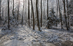 Snowfall after wetland stand in morning Stock Photography