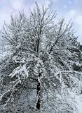 Snowfall in winter forest. Royalty Free Stock Photos