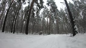 Snowfall in the winter forest. Country road in snowdrift stock video