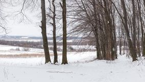 Snowfall in winter forest stock footage