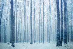 Snowfall in winter forest landscape Stock Photo