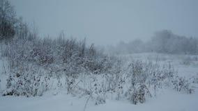 Snowfall .Winter landscape. stock footage