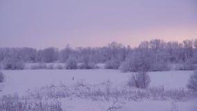 Snowfall .Winter landscape. stock video footage