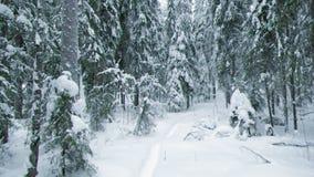 Snowfall .Winter landscape. stock video