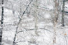 Snowfall in winter park Royalty Free Stock Photos