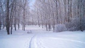 Snowfall, Winter Park stock video footage