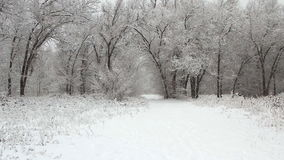 Snowfall in a winter park with snow stock footage