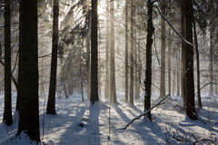 Snowfall in winter sun Stock Photography