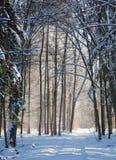 Snowfall in winter sun Stock Photos