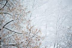 Snowfall Royalty Free Stock Photos