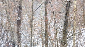 Snowfall in winter wood stock video