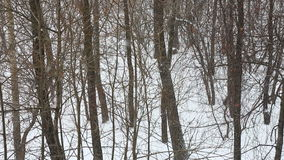 Snowfall in the winter wood stock footage