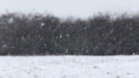 Snowfall in wintertime stock video footage