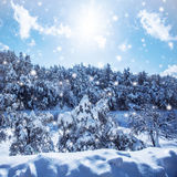 Snowfall in the woods Royalty Free Stock Photography