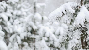 Snowfall in the Woods stock footage