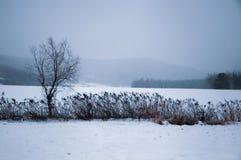 Дерево в snowfield Стоковое Изображение RF