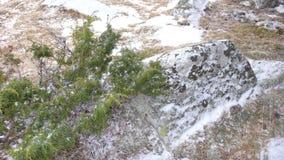 Snowfield bij bergen stock afbeeldingen