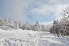 The snowfield and trees Royalty Free Stock Photo