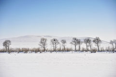 Snowfiled Foto de Stock Royalty Free