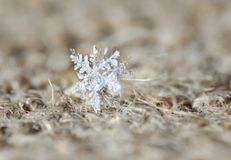 Snowflake στην απόλυση στοκ εικόνα