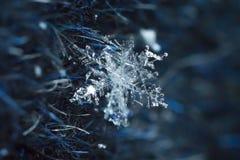 Snowflake φυσικός μακρο πυροβολισμός κινηματογραφήσεων σε πρώτο πλάνο στοκ εικόνα
