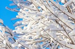 Snowflake χειμερινού ουρανού χιονιού κλάδων μπλε δασικό δέντρο παγετού Στοκ Εικόνα