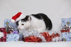 snowflake χιονιού γατακιών απεικόνισης Χριστουγέννων γατών χειμώνας Στοκ Εικόνα