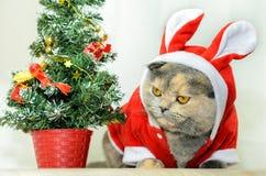 snowflake χιονιού γατακιών απεικόνισης Χριστουγέννων γατών χειμώνας Στοκ φωτογραφία με δικαίωμα ελεύθερης χρήσης