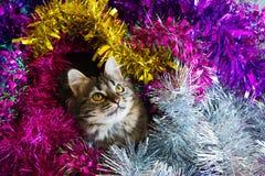 snowflake χιονιού γατακιών απεικόνισης Χριστουγέννων γατών χειμώνας Στοκ εικόνες με δικαίωμα ελεύθερης χρήσης