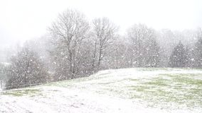 Snowflake χιονιού στο δάσος απόθεμα βίντεο