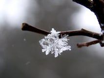 snowflake Foto de Stock Royalty Free