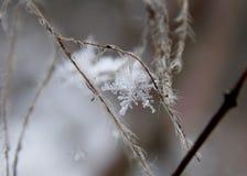 snowflake Imagens de Stock