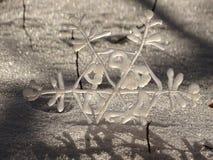 snowflake Imagem de Stock