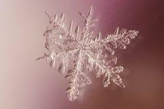 snowflake Fotografia de Stock Royalty Free
