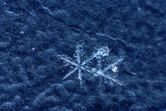 Snowflake on black bacground Stock Image